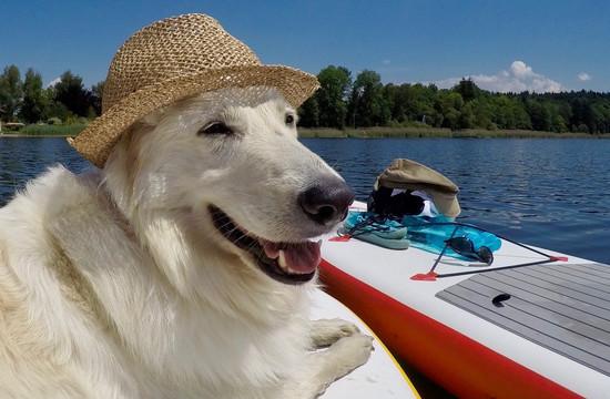 Ein fröhlicher Hund mit Sonnenhut genießt im Urlaub mit Hund im Salzkammergut eine Bootsfahrt am See